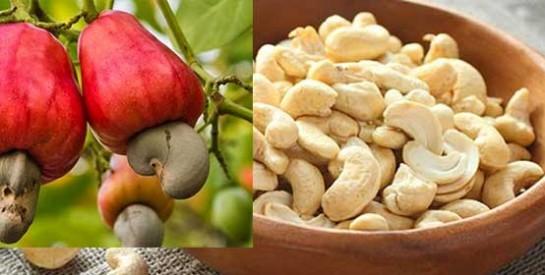 Les noix de cajou pour prévenir le cancer