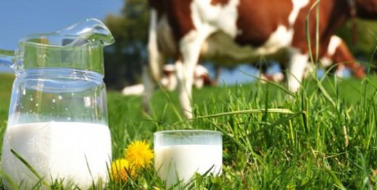 Vache, brebis, chèvre: tous les laits se valent-ils?