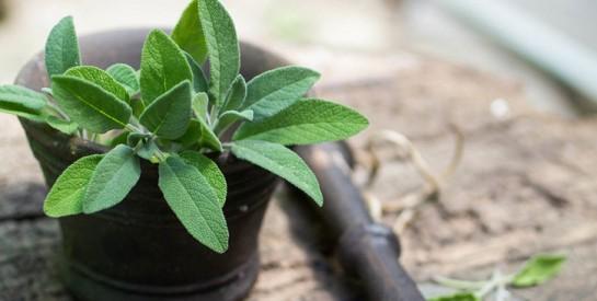 Fertilité : pour mettre toutes les chances de votre côté, misez sur les plantes !