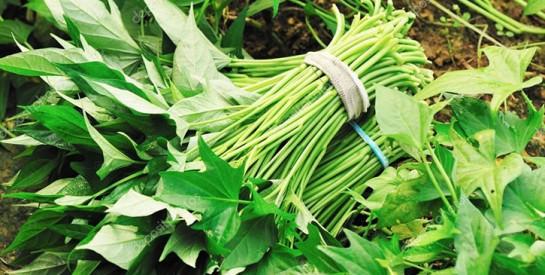 Manger les feuilles de patates douces : un super-aliment très nutritif