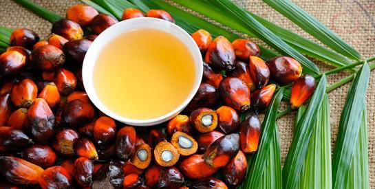 L`huile de palme est-elle mauvaise pour la santé ?