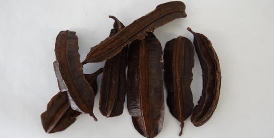 Le fruit duTetrapleura tetraptera ou l'ésese : une pure merveillepour traiter la stérilité