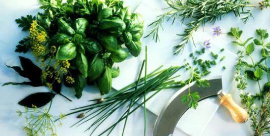 Basilic, menthe, persil… 7 herbes fraîches pour quel bienfait ?