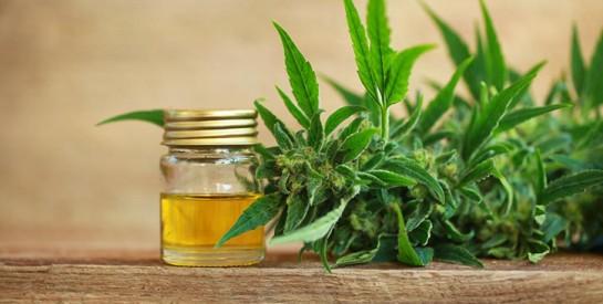 Cosmétiques au cannabis : succombez aux bienfaits de cette ``pépite verte`` !