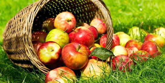 Trop de cholestérol ? Passez à 2 pommes par jour