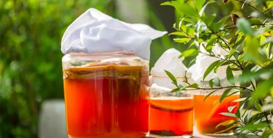 Le kombucha, une boisson miracle aux propriétés bénéfiques