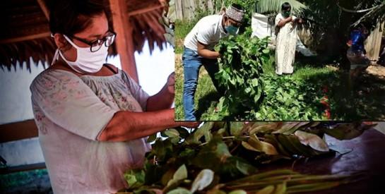 Pérou: un remède traditionnel pour contrer le coronavirus