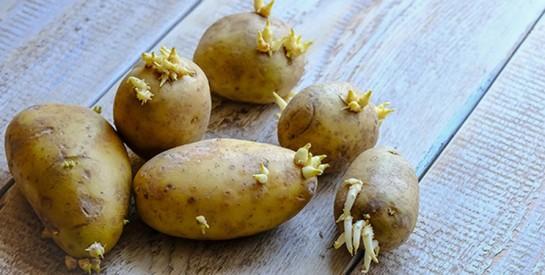 Pomme de terre : pourquoi vous ne devez surtout pas la manger quand il y a du vert !