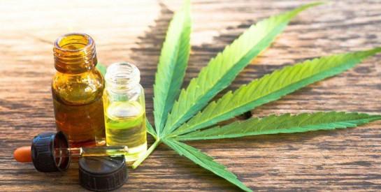 Santé capillaire et cannabis : l'herbe favorise des cheveux forts