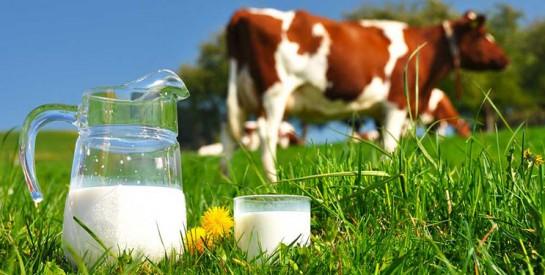 Le lait est-il bon ou mauvais pour la santé?