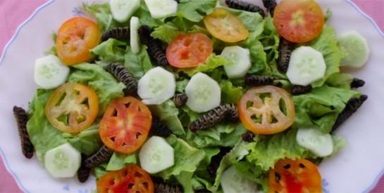 La chenille de karité plus protéinée que la viande