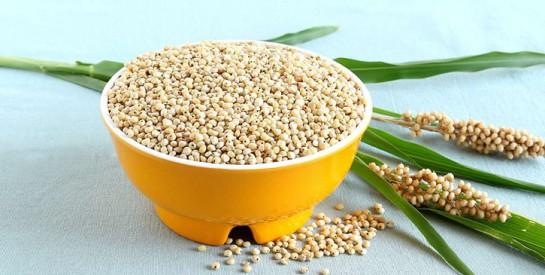 Sorgho, la céréale écologique et sans gluten
