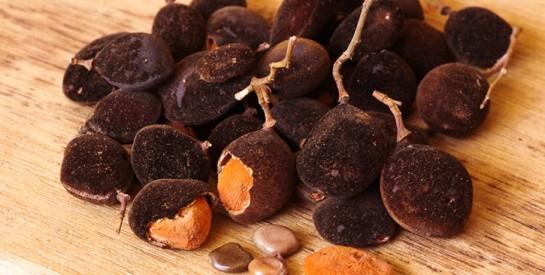 Les vertus curatives du tamarin noir ou ``Chat noir``