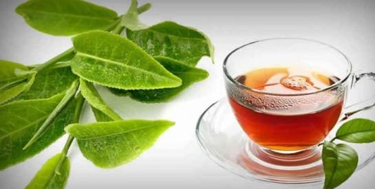 Les feuilles de goyave : une merveille pour la fertilité