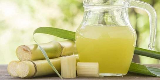 La canne à sucre : cet aliment aux nombreuses facettes