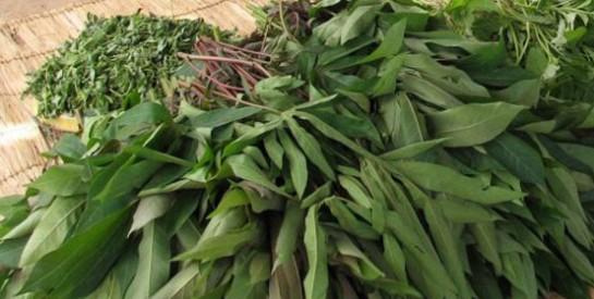 Résoudre la constipation avec les feuilles de manioc